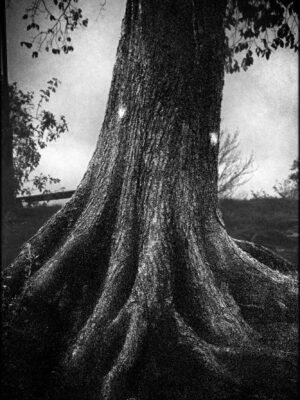 Vanadislunden – 30x40cm