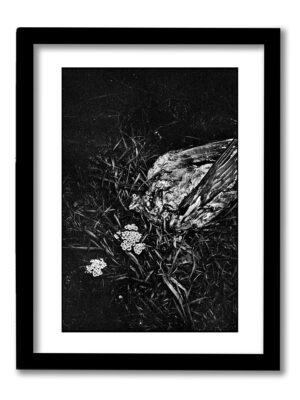 Enskede Fågel – 30x40cm