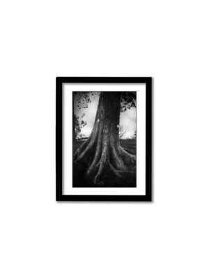 Vanadislunden – 13x18cm