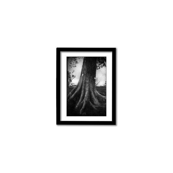 Signerad fine art print från Vanadislunden 2020. Högkvalitativ fotokonst.